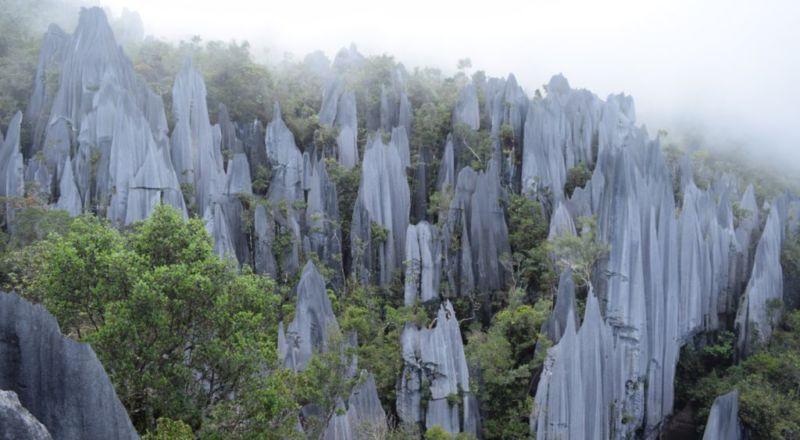 The Pinnacles, Mulu @2015