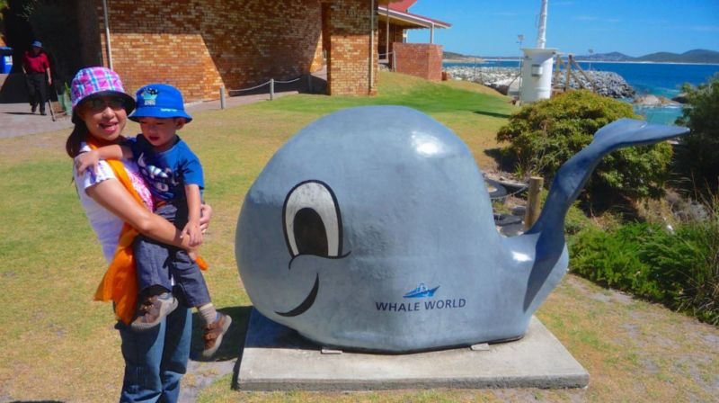 Whale World, Albany