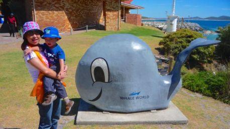 Whale World, Albany