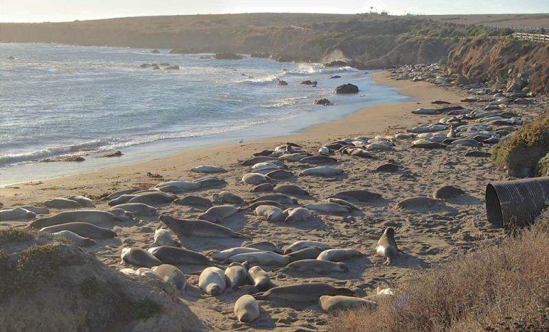 Elephant Seals Vista Point, San Simeon