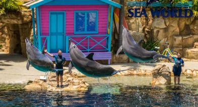 Affinity - Dolphin Show. One of the most popular show in Sea World. Learn more about these wonderful creatures.
