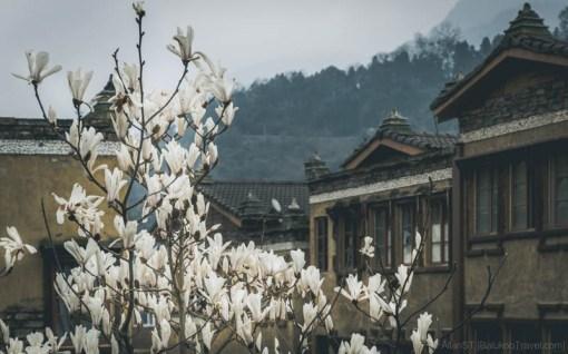 ShuiMoZhen (水磨镇) (Sichuan, China) (Mar-2017)