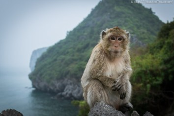 Monkey Island (Lan Ha Bay, Vietnam)