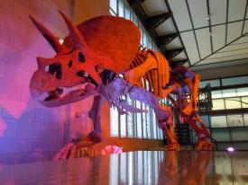 dinosauri a bruxelles