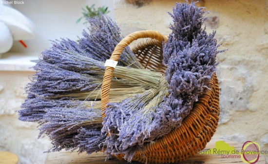 lavanda provenza