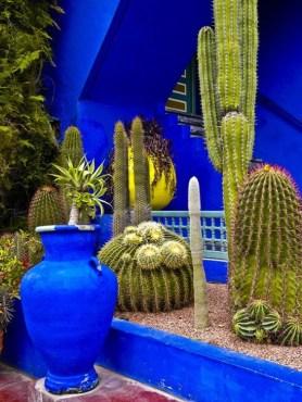 piante a marrakesh