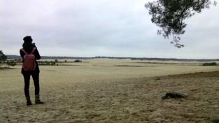 drunense-duinen--parco-dune_med_hr (1)