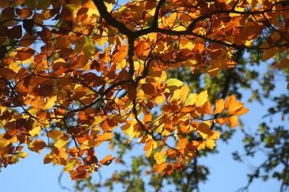 fall-foliage-209219_640