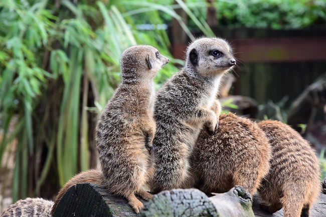lemuri allo zoo di pistoia