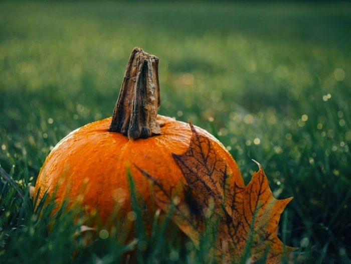 lavoretti di halloween zucca bambini giramondo