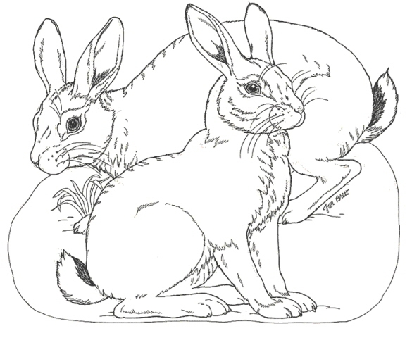 disegno lepre da colorare leprotto da colorare tana di lepre nel