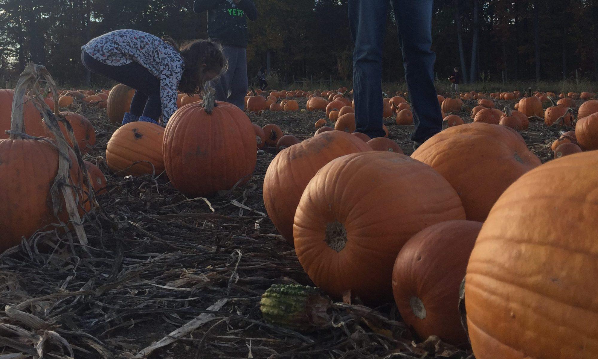 Pumpkin Farm Trip