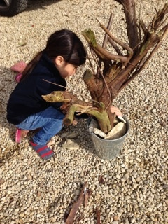 Maya from Jake & Maya creating a fairy garden with a tree branch