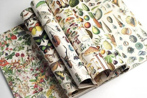 natural history gift wrap and poster book