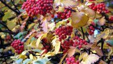 Herbst in Horn