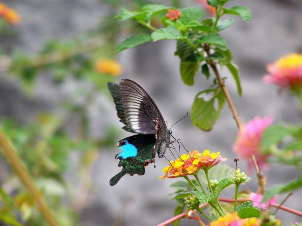 Schmetterling im Steinwald bei Kunming - schönste Orte