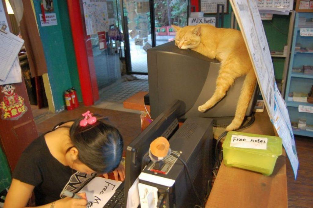 Katzen in China