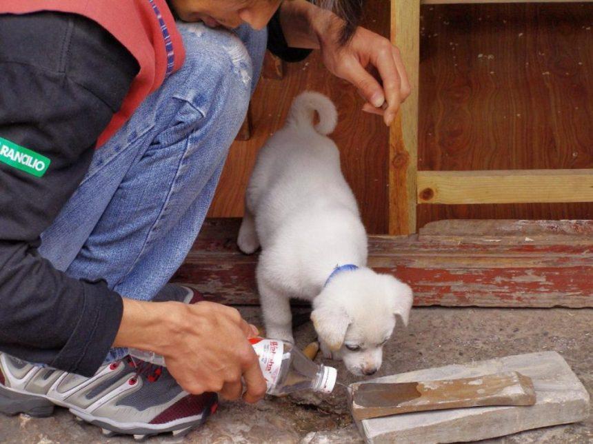 Hund in Dali