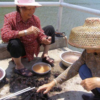 Sai Kung: Frauen beim Seeigel Pulen