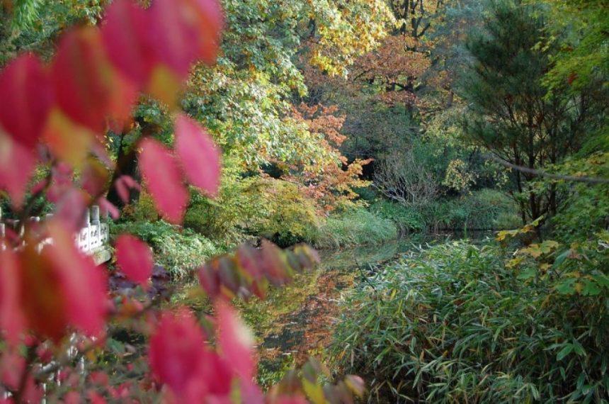 Duisburg Buntes Herbstlaub