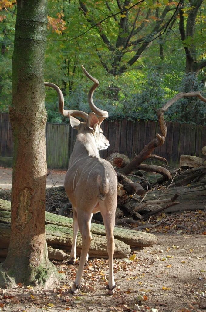 Duisburg Zoo