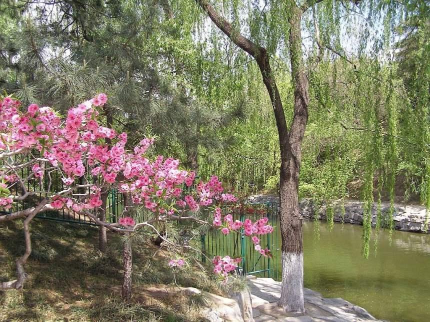 Sommerpalast Peking blühender Baum