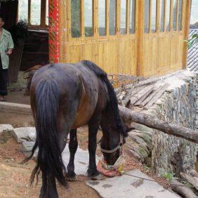Meijing Lou Pferd