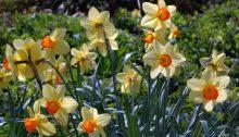 Frühling in Wandsbek