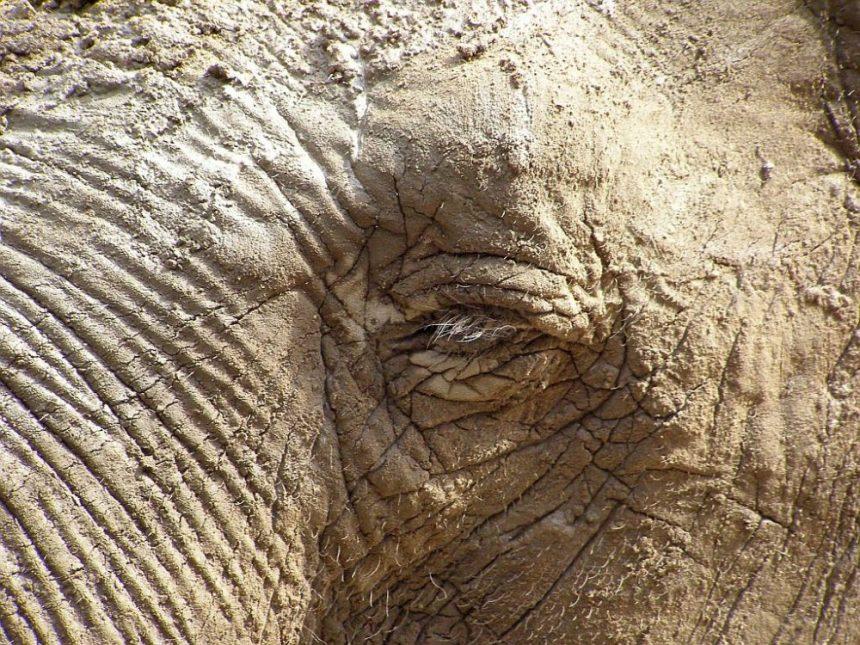 Tierpark Hagenbeck Elefant