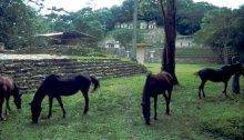 Bonampak Yucatan