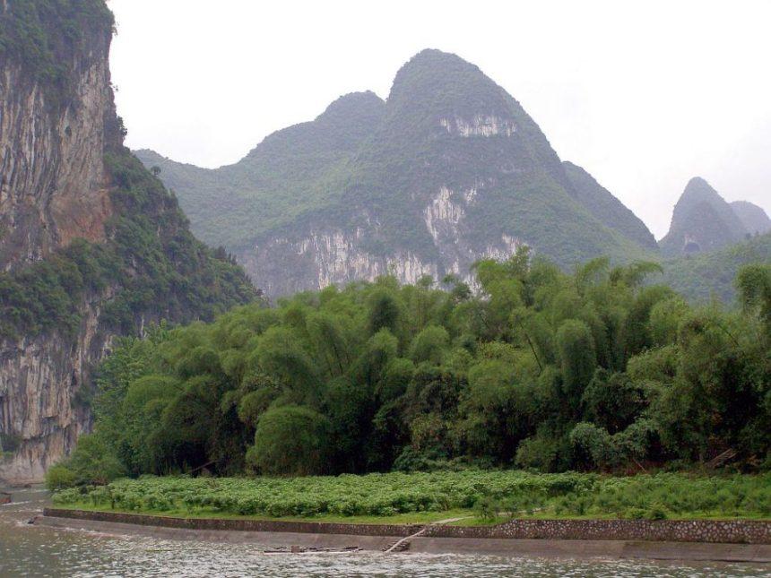Bambus am Ufer des Li-Flusses