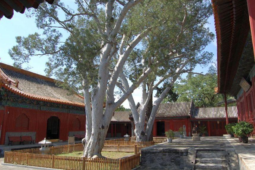 2 Tage Peking: Fahai Tempel