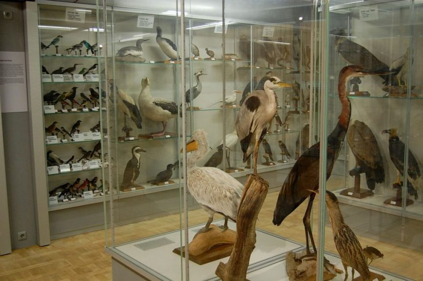 Überseemuseum 8