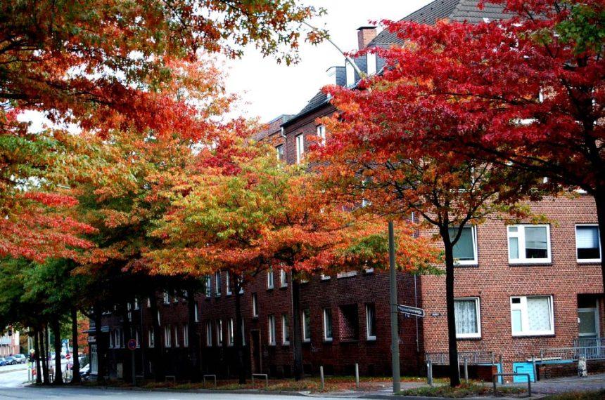 Herbst in Hamburg Horn