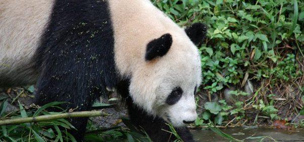 Umweltschutz in China