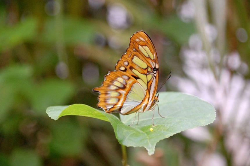 Schmetterling London Zoo