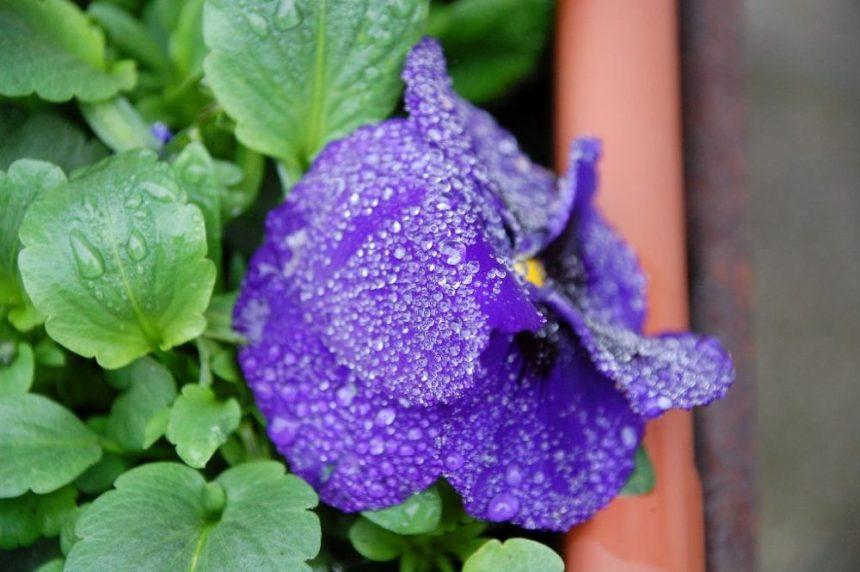 Regen im Wendland - für FoPaNet