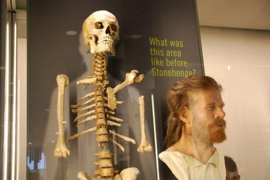 Im Museum - Skelett und Rekonstruktion eines Mannes
