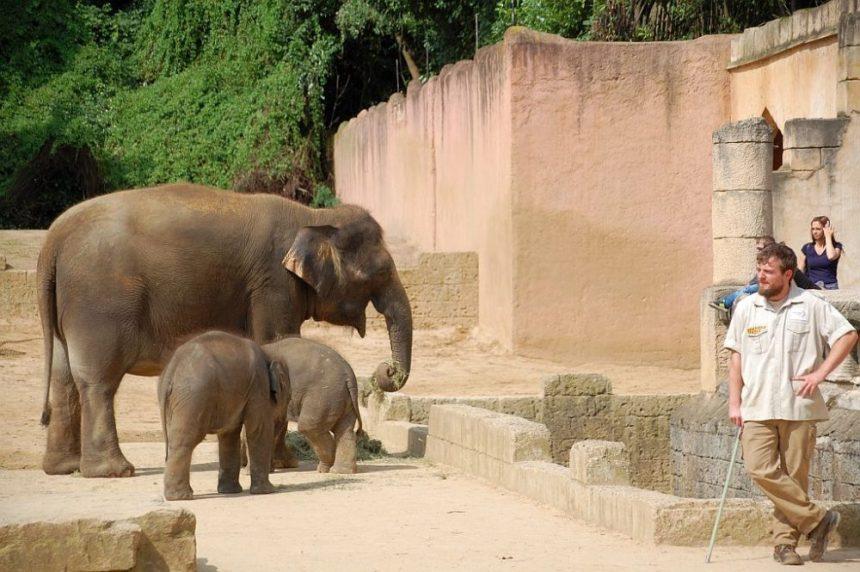 Entspannte Elefanten bei der Fütterung