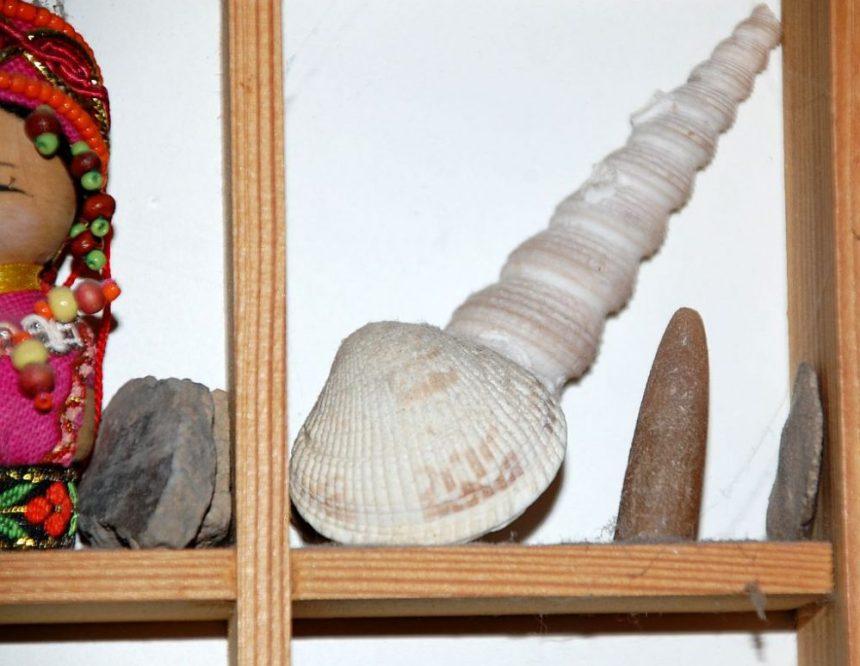 Muscheln und Donnerkeil