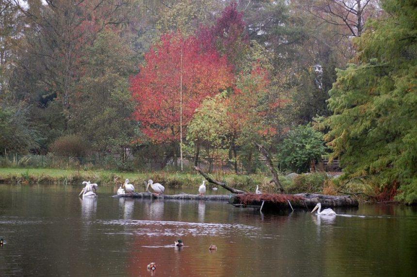 Hagenbeck Tiergarten Birma Teich mit Pelikänen