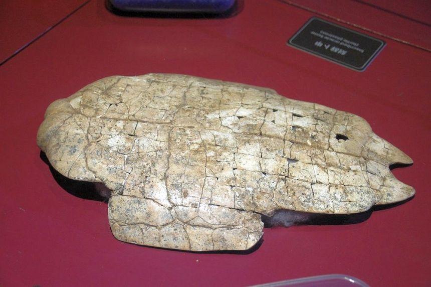 Schildkrötenpanzer mit Schriftzeichen.
