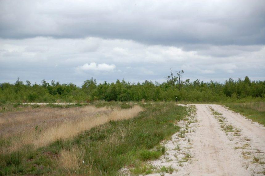 Bourtanger Moor Sandweg