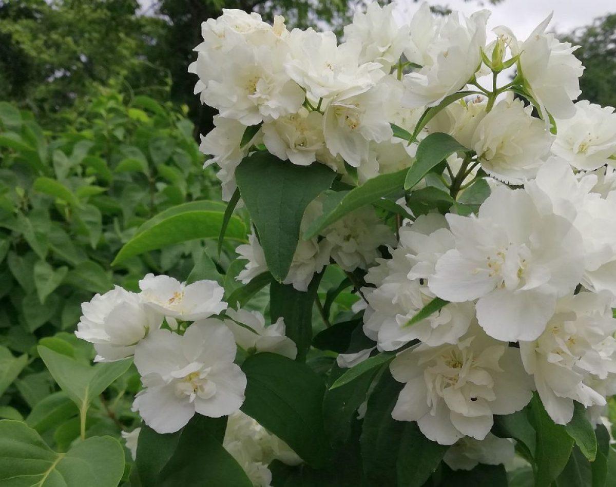 Frühsommer Blüten
