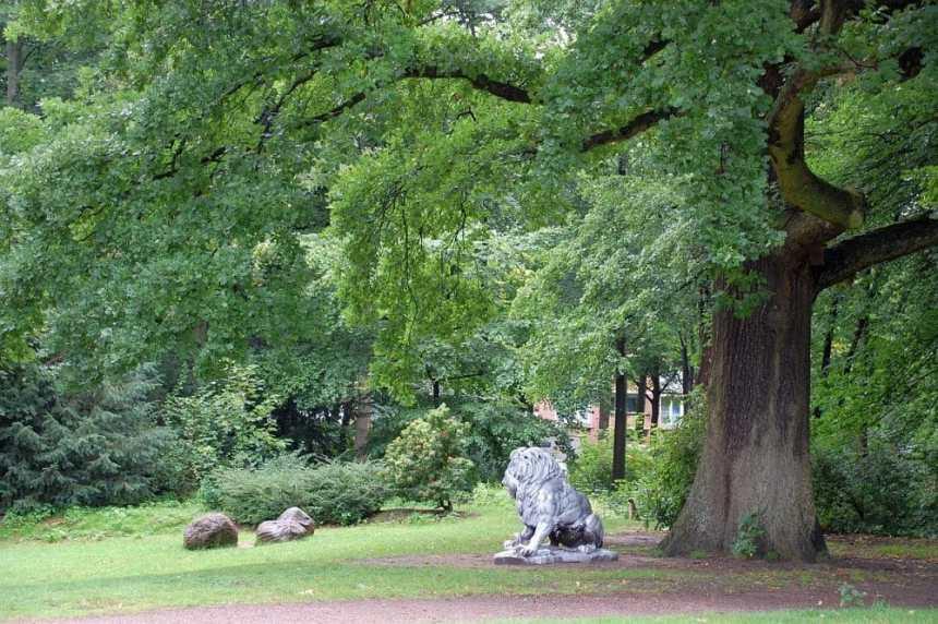 Blohms Park Eiche