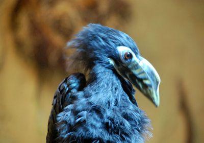 Zoo Dresden blauer Vogel