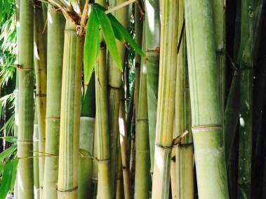 Elegant light green canes with dark green stripes