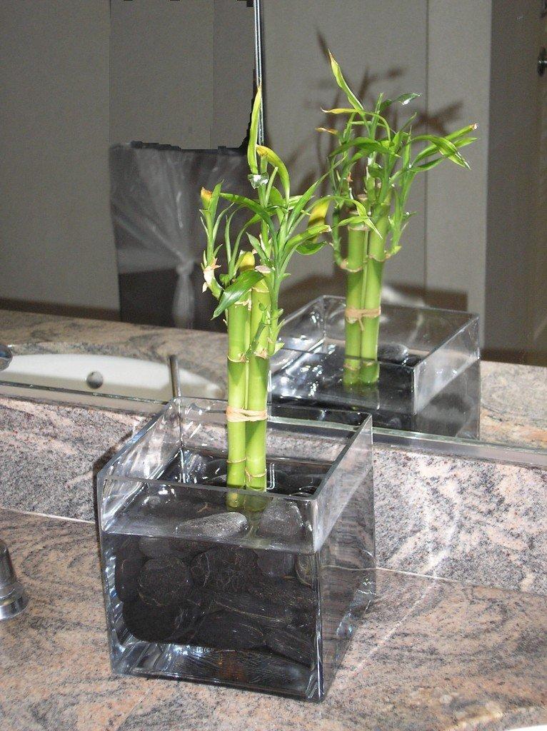 Growing Bamboo Indoors