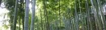 Bambuswald, Foto: Christoph Tönges, CONBAM
