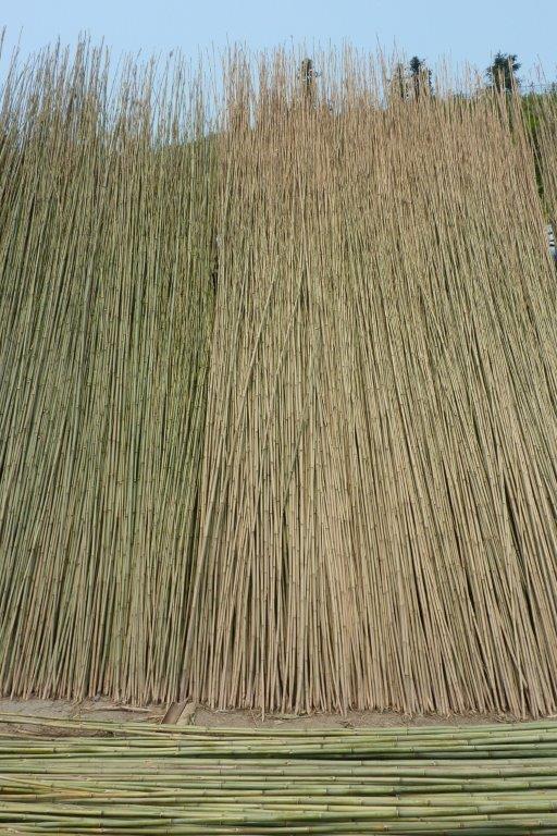 Tonkin Bambusstaebe Trocknung CONBAM Bambus günstig kaufen
